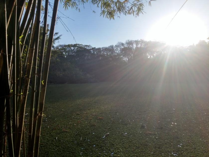 Olhando Para o Sol